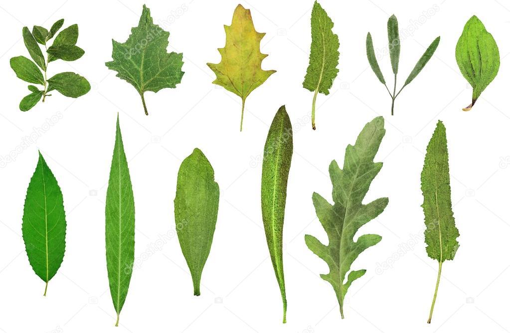 Herbarium Blätter herbarium der trockenen blätter stockfoto lilkin 121404772