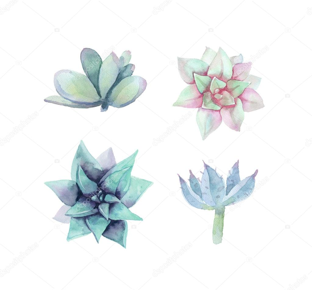 Set of watercolor succulent. Isolated on a white background.