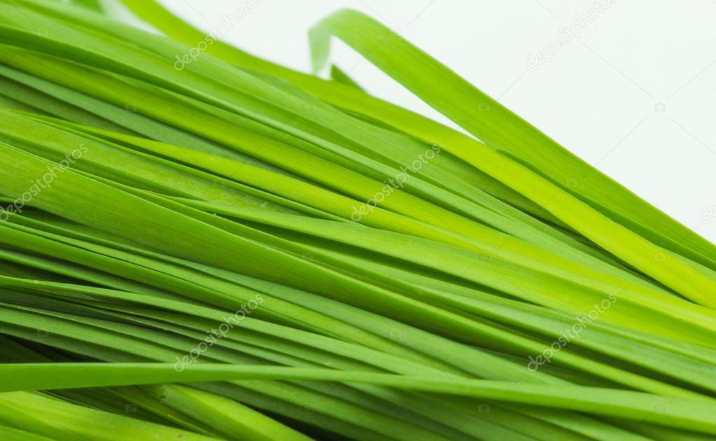 Solgar Garlic Powder Vegetable Capsules 500 mg 90 Count