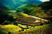 Rice fields on terraced of Mu Cang Chai, YenBai, Vietnam. Rice fields prepare the harvest at Northwest Vietnam.