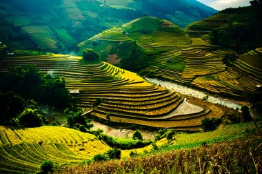 Rice fields on terraced of Mu Cang Chai, YenBai, Vietnam. Rice fields prepare the harvest at Northwest Vietnam.