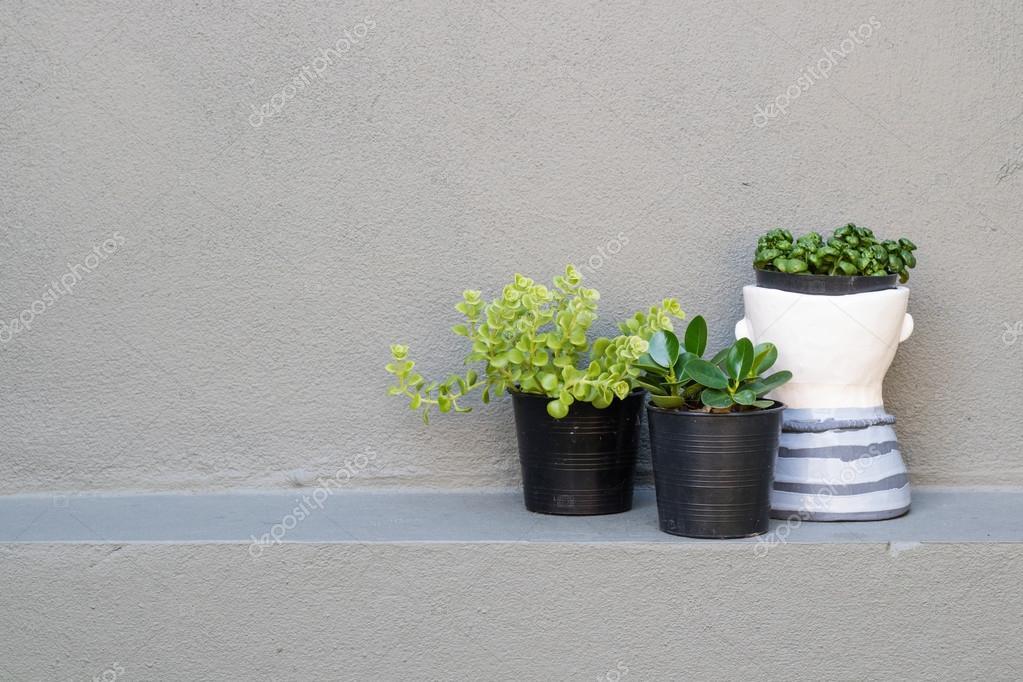 Plant in vaas op grijs muur decoratie concept u stockfoto