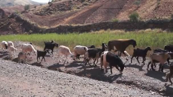 Kozy v údolí Zat