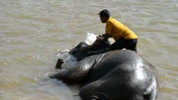 Slon ze sloního sirotčince