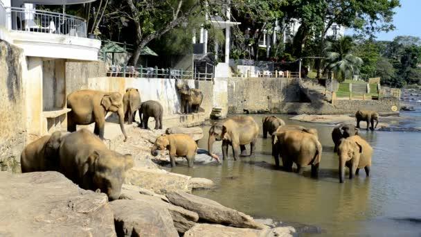 Ázsiai elefánt a folyó