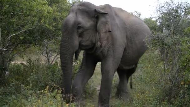 Slon Minneriya národní Park