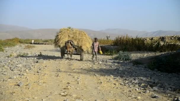 Small boy with donkey cart