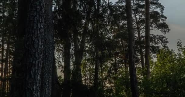 Krásný východ slunce Sluneční svit ve slunném jarním jehličnatém lese. Sluneční paprsky skrze lesy v lesní krajině.