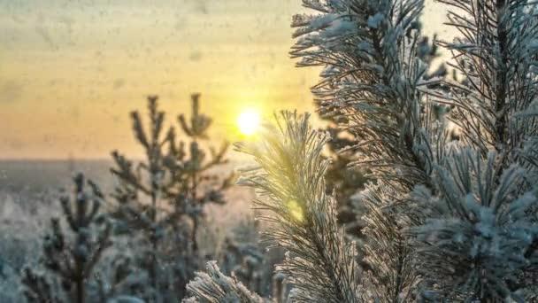 Sníh padající příroda lesní stromy krajina na bílém slunečném zimním dni náladu. Světlý a jasný sníh studený čas, video smyčka, cinemagraph. Video smyčka