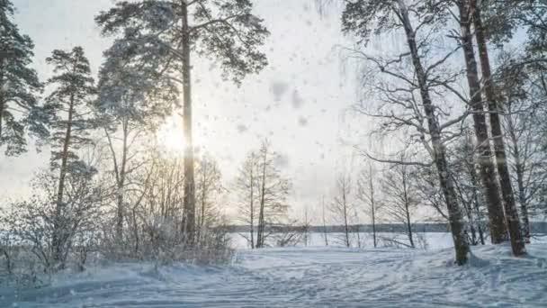 Hyperlapse v zimě zasněžený les během sněžení, krásná zimní krajina a sníh