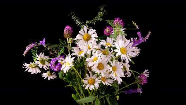 Flowers of white beautiful chamomiles. A bouquet of field flowers, daisies. Close-up. Summer chamomiles. Herbal flowers. Blooming chamomiles closeup. 4k time-lapse
