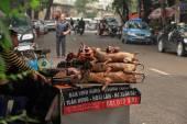 Prodej a nákup psí maso ve Vietnamu