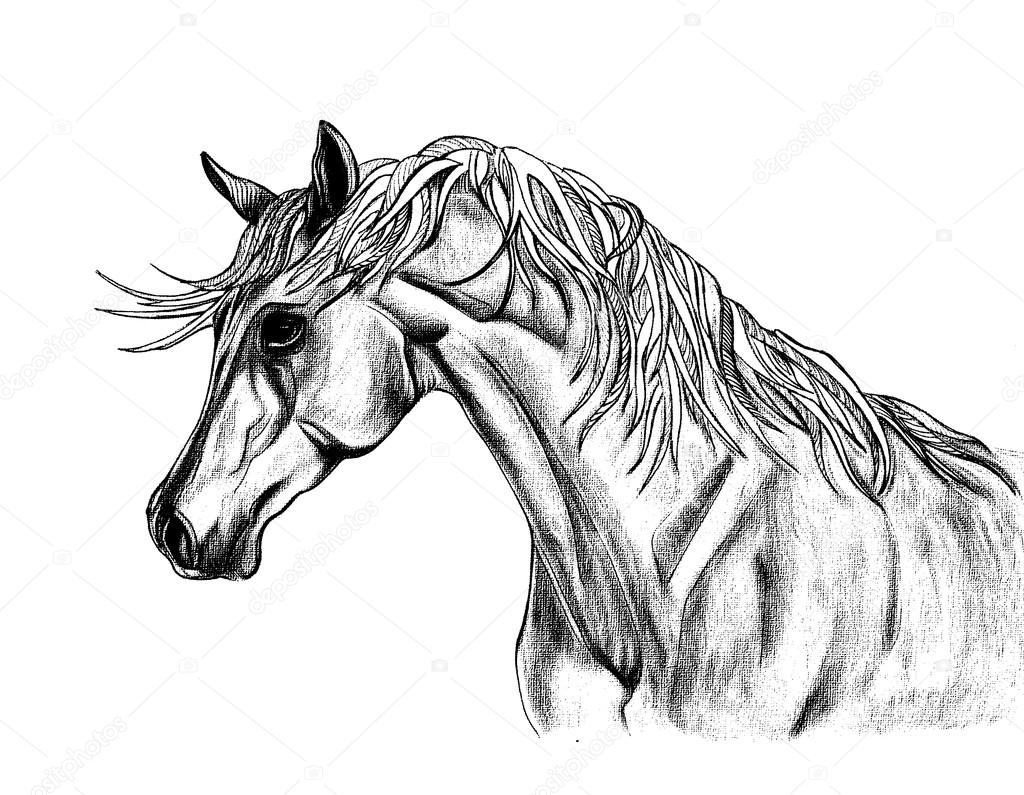ᐈ Horse Sketches Stock Images Royalty Free Horse Sketch Drawings Download On Depositphotos