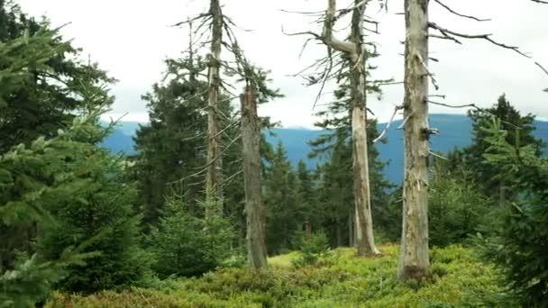 Znečištění ovzduší mrtvými stromy způsobuje kyselé deště, oxidy síry, dusíkatý ozon. Vliv emisí, smrk Picea abies panenské lesy Jeseníky Chráněná krajina, vyvrcholení dřeva, So2 emisní hora