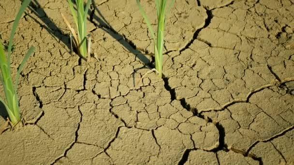 Aszály repedt tó vizes élőhely, mocsár nagyon kiszáradt a talaj kéreg föld klímaváltozás, környezeti katasztrófa és a föld repedések nagyon, halál a növények és állatok, talaj száraz lebomlás