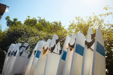 Many surfboards parked in surf camp