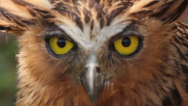 Uhu-Vogel in Asien
