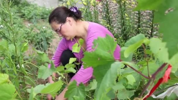 Žena s nástrojem zahradnictví v hroznech