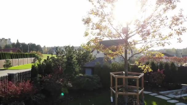 landscape design green nature lawn, sunny autumn day with sun beams, big oak tree, cozy yard of