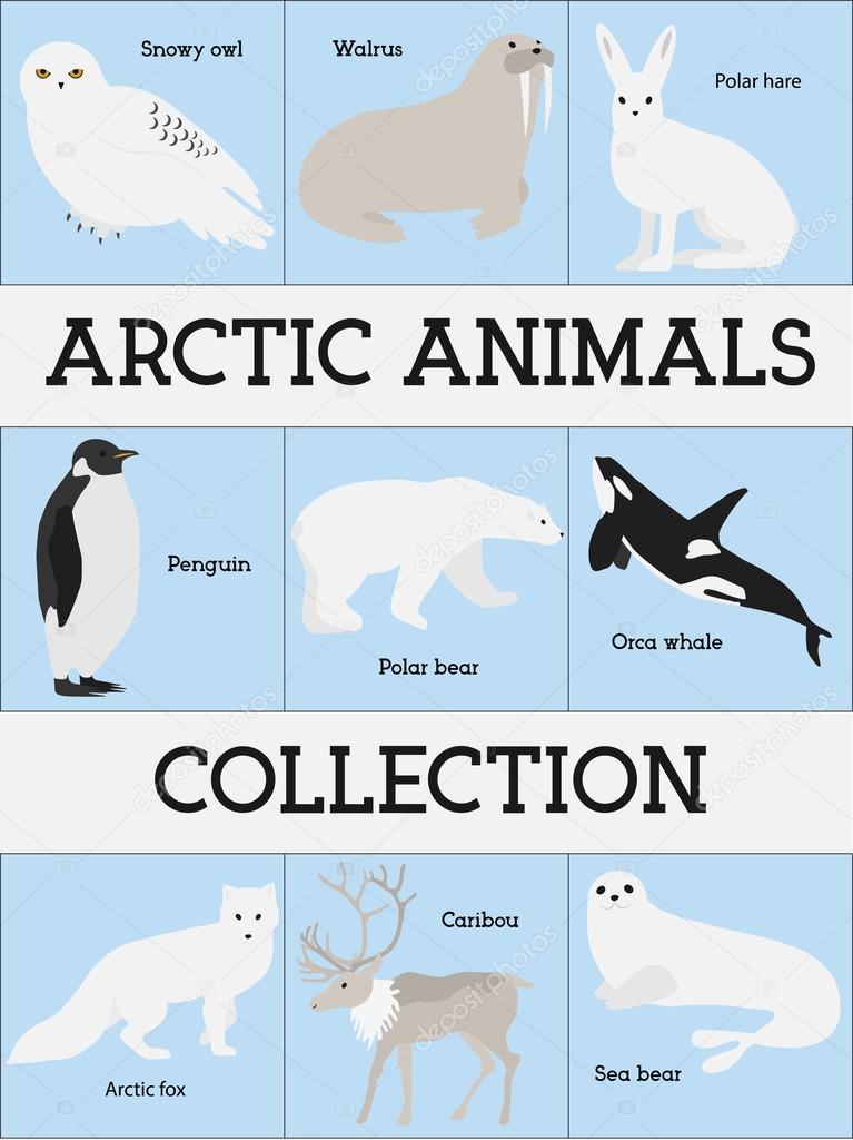 北極の動物コレクション ストックベクター katousha 107990684