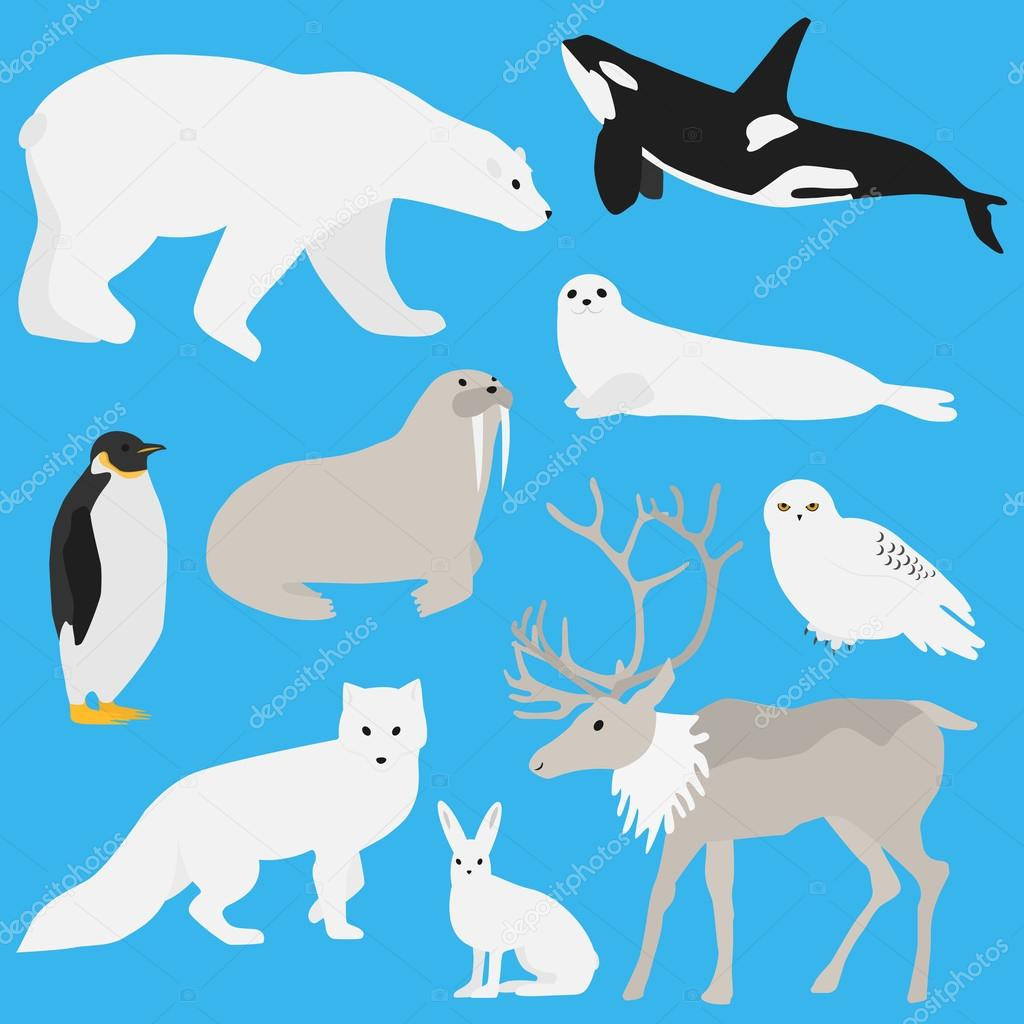 Arctic animals collection three