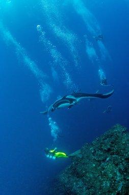 Manta Ray - Scuba diving