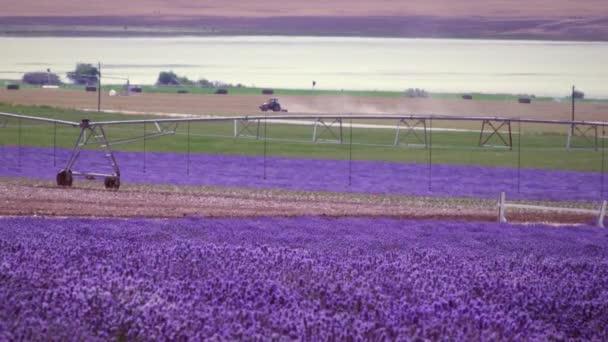 levandulové pole a zavlažovací systém