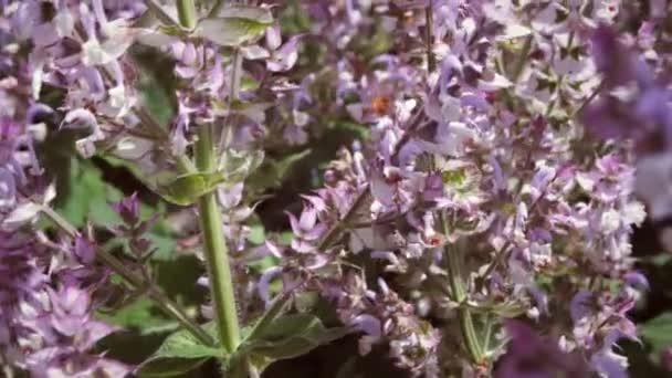 fialové květy, pohybující se ve vánku