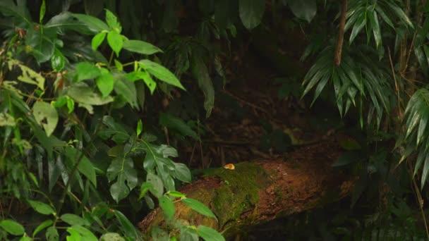Opice se pohybuje přes džungli listoví