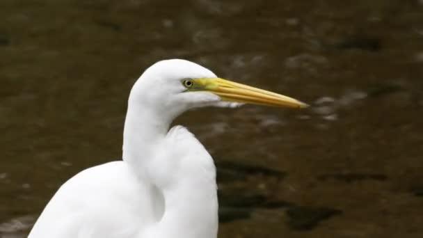 white egret bird in rio
