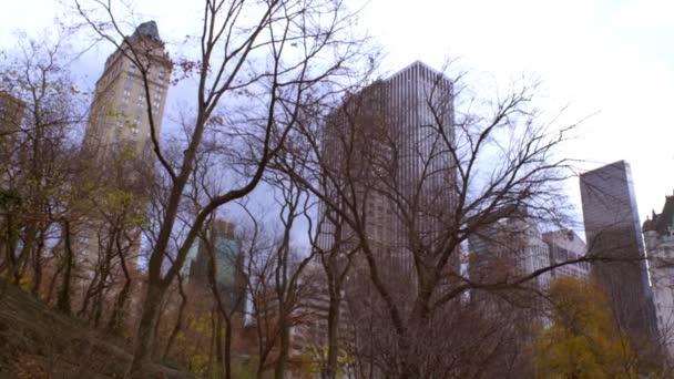 buildings behind trees in New York City.