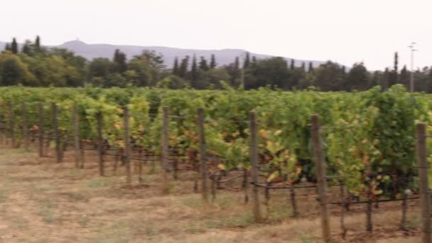 Posouvání záběr vinice v Toskánsku