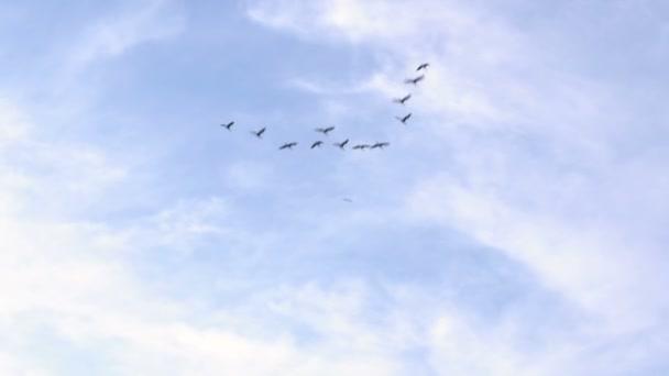 Nyáj madarak repül