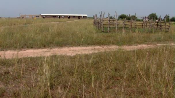 A grassy field in Africa.