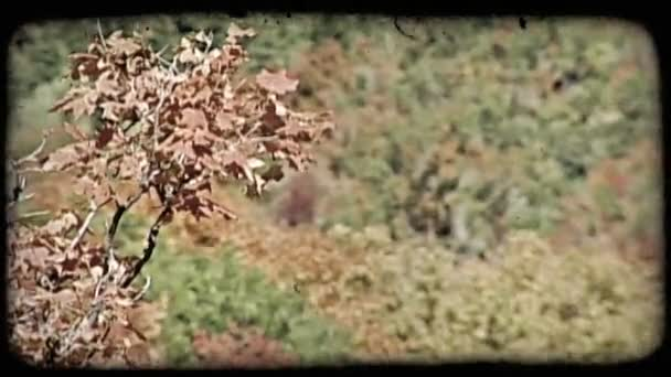 Colorful autumn trees. Vintage stylized video clip.