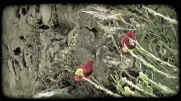 Italian Flowers. Vintage stylized video clip.