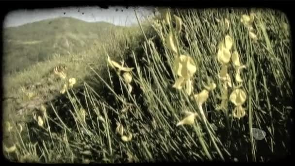 Mountain Field. Vintage stylized video clip.