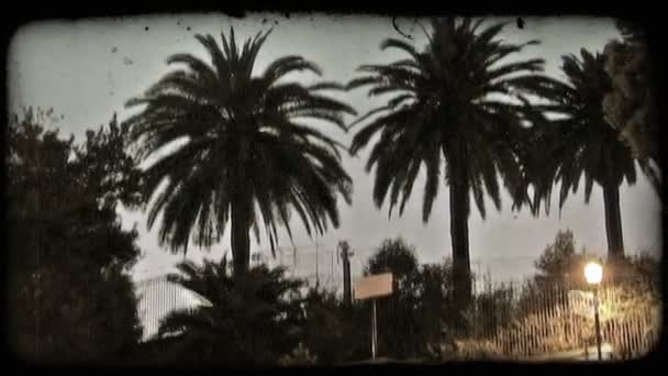 Palm Trees. Vintage stylized video clip.