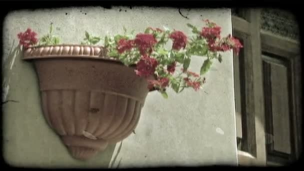 Wall Flower. Vintage stylized video clip.
