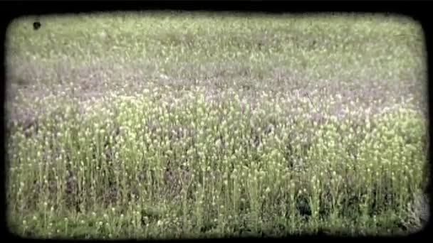 Grass and flowers in field. Vintage stylized video clip.