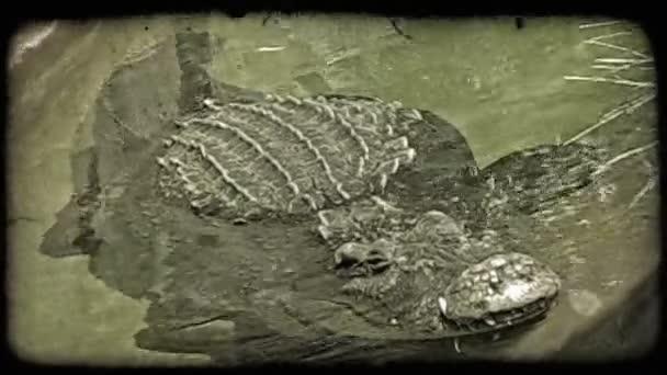 Гифка крокодил нет бревно