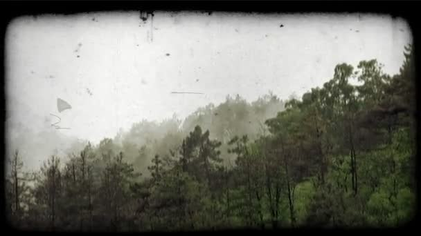 Foggy Forest. Vintage stylized video clip.