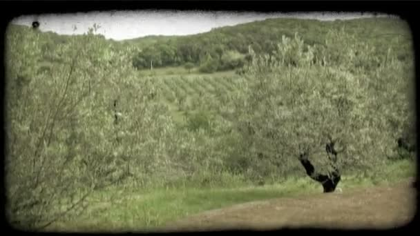 Italian Orchard 2. Vintage stylized video clip.