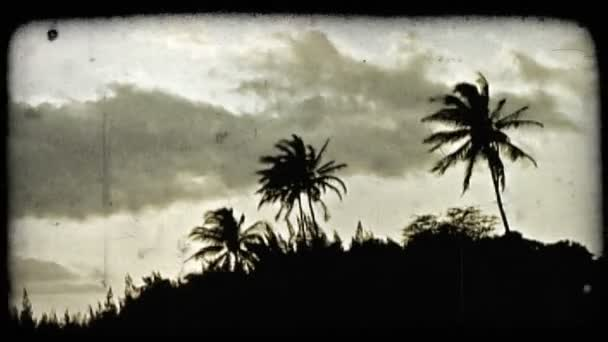 Palm trees and sunset. Vintage stylized video clip.