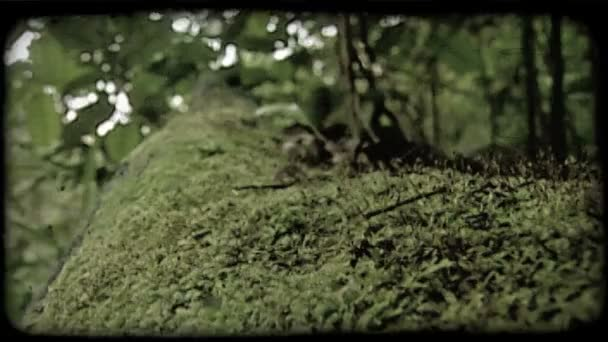 Green moss on trunk. Vintage stylized video clip.