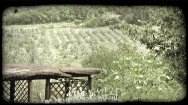 Italian Orchard.Vintage stylized video clip.