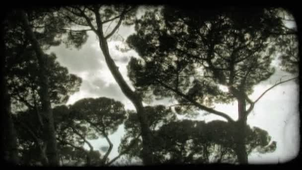 Trees and clouds. Vintage stylized video clip.