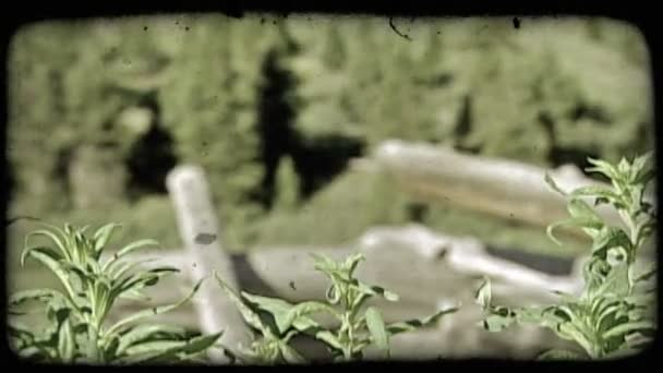 Old mountain fence and plants. Vintage stylized video clip.