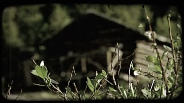 Old log cabin  Vintage stylized video clip