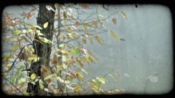 Autumn Leaves 3. Vintage stylized video clip.